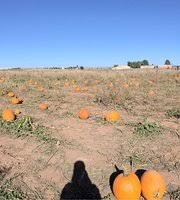 Mccalls Pumpkin Patch Haunted House by Mccall U0027s Pumpkin Patch Moriarty All You Need To Know Before