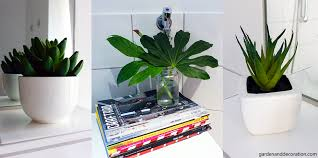 Plants In Bathroom Images by Small Bathroom Makeover With Storage Solutions Garden U0026 Decoration