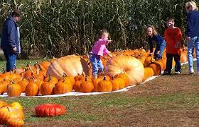Hillcrest Farms Pumpkin Patch by Grandad U0027s Pumpkin Patch North Carolina Haunted Houses