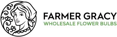 flower bulbs for mail order companies farmer gracy wholesale