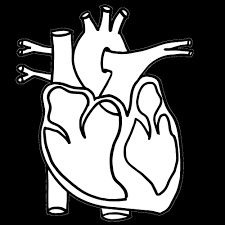 Heart Body Organ Coloring Pages