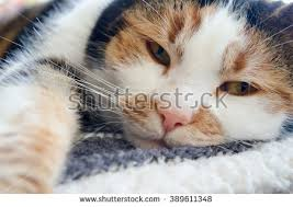 cat on stock images royalty free images vectors