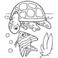 Koi Fish With Turtle