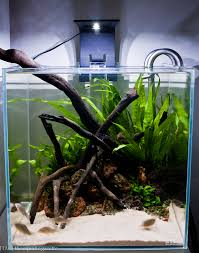 Aquascape Series | [T A G] Aquascape Of The Month June 2015 Himalayan Forest Aquascaping Interesting Driftwood Placement Aquascapes Pinterest About The Greener Side Aquascaping Design Checklist Planted Tank Forum Simons Blog Decoration Bring Nature Inside Home Ideas Downhill By Arie Raditya Aquarium 258232 Aquaria Creating With Earth Water Fire Air Space New Aquascapemarch 13 2016page 14 Page 8 Aquapetzcom Magical Youtube 386 Best Tank Images On Aquascape