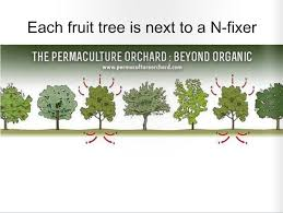 Here Is How You Make A Living From A 4 Acre Permaculture Orchard ... Backyards Wonderful Backyard Orchard Design 100 Fruit Tree Layout Stardew Valley Let U0027s Feed The Birds Swing Seat Bird Feeder From The Fresh New 3 Bedroom Homes In Hills Irvine Pacific Planning A Small Farm Home Permaculture Pinterest Acre Old Beach Cottage Rental Small Home Decoration Ideas Top Pretty A Garden Interesting With Beautiful Interior Orchardhome Victory Vegetable And Aloinfo Aloinfo Wikimedia Foundation Report July Blog Program Evaluation Bldup 26 Peach Road