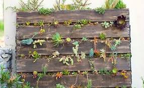 Pallet Vertical Succulent Garden Flowers Gardening Repurposing Upcycling