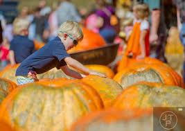 Burts Pumpkin Farm 2015 by Capture Life Through The Lens Burt U0027s Pumpkin Farm