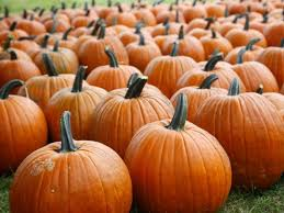 Pumpkin Patch Northwest Arkansas 2015 by 8 Apple Orchards And Pumpkin Patches In Central Iowa
