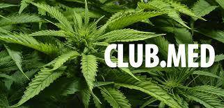 cannabiskonsum führt nicht zu suizidalem verhalten hanfjournal
