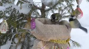 Birds Peck Seeds From A Bag Of Seed Under The Christmas Tree Stock