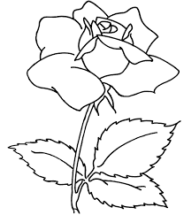 Flowers Coloring Pages Spray Flower Sheets For Adults