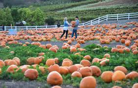 San Jose Pumpkin Patch 2017 by Pumpkin Patches On The First Coast Firstcoastnews Com