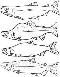 Fish Colouring Pages For Adults Books Free Coloring Page Salmon Printable Kids
