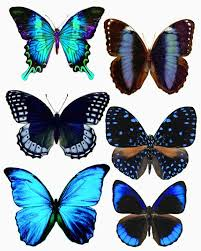 Butterflies Could Print In Grayscale And Color Or Paint Use As Is Scrapbooking Papercraft Projects