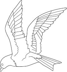 Drawings Of Birds In Flight
