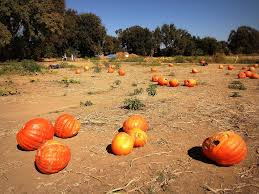Bishop Pumpkin Patch Lincoln Ca by Elevation Of Wheatland Ca Usa Maplogs