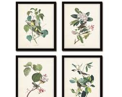Audubon Bird Prints Set No 16 Botanical Illustration Vintage