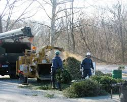 Christmas Tree Hill Shops Lancaster Pa by Here U0027s Where You Can Recycle Your Christmas Tree In Lancaster
