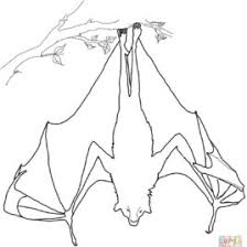 Fruit Bat Coloring Page Free Printable Pages