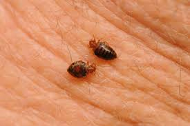 Bed Bug Awareness Week begins April 22nd ⋆ ProBest Pest