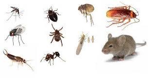 petites betes dans la maison 8 remèdes simples qui vont éloigner les insectes de votre maison