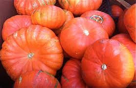 Cinderella Pumpkin Seeds Australia 15 winter squash and pumpkins varieties