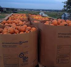 Pumpkin Patches In Okc by Oklahoma Agritourism Oklahoma U0027s Growing Adventure