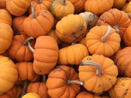 Pumpkin Patches Maryland Heights Mo by Chesterfield Valley Pumpkin Patch