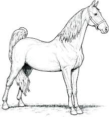 Realistic Horse Coloring Pages Race