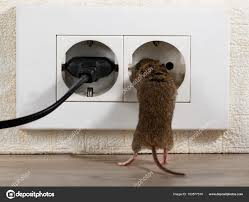 100 Mouse Apartment Closeup Stands Its Hind Legs Climbs Electric Outlet High