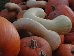 Iron Kettle Pumpkin Farm by Ted U0027s King Road Photo Gallery Thumbnails