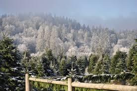 Christmas Tree Baler Used by Tree Blog