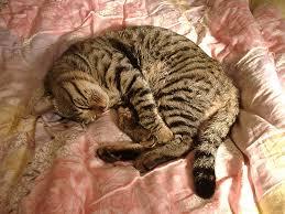 cat in house cat in japan cat in house 17 by iguru71 on deviantart