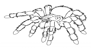 Spider Coloring Pages GetColoringPages