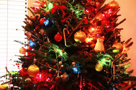 Silver Tip Christmas Tree Sacramento by Faine Greenwood 11 31 Faine Opines