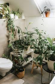 6 perfekte pflanzen für dein badezimmer