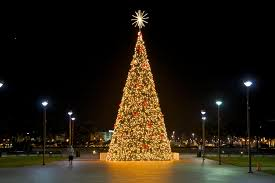 Longest Lasting Christmas Tree by Buying A Christmas Tree In Miami Florida