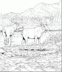 Remarkable Elk Moose Caribou With Coloring Pages And Realistic