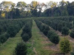 Christmas Tree Shop Deptford Nj Number by 3 Reasons U0026 22 Places To Buy Real Christmas Trees In Nj