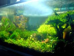 Gallery ~ Simple Aquascape The Green Machine Aquascaping Shop Aquarium Plants Supplies Photo Collection Aquascape 219 Wallpaper F Amp 252r Of The Month October 2009 Little Hill Wallpapers Aquarium Beautify Your Home With Unique Designs Design Layout New Suitable Plants Aquariums Pinterest Pics Truly Inspired Kinds Ornamental Aquascaping Martino Agostini Timelapse Larbre En Mousse Hd Youtube Beauty Of Inside Water Garden Inspirationseekcom Grass Flowers Beautiful Background