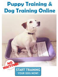 Small Non Shedding Dogs For Adoption by Hypoallergenic Dogs