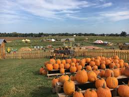 Frederick Maryland Pumpkin Patch by Summers Farm Home Facebook
