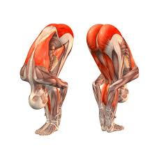 Stand Up Straight Keep Your Back Too Bend Legs A Little Start Bending Forward To Moving Stomach Towards Thighs