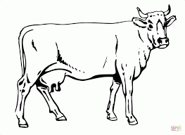 Adult Cows Coloring Pages Cow Sheet