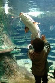 nemo et ses copains à l aquarium de la porte dorée kid friendly