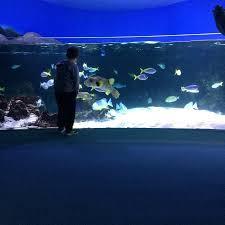 photo2 jpg picture of aquarium la rochelle la rochelle