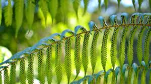 Good Plants For Bathrooms Nz by Ferns Native Plants