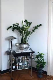 zimmerpflanzen tipps für den schatten tolle pflanzen und