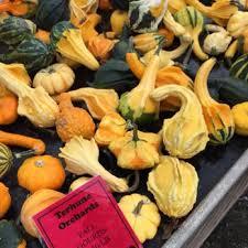 Pumpkin Picking Nj Near Staten Island by Terhune Orchards 275 Photos U0026 223 Reviews Farms 330 Cold