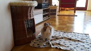 kaninchenseele de